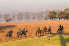 Chevaux de course formant l'aube Photos libres de droits