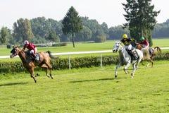Chevaux de course sur la voie de Partynice Photo stock