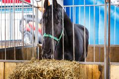 Chevaux de diverses races à l'exposition des chevaux Photos stock