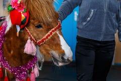 Chevaux de diverses races à l'exposition des chevaux Photo stock
