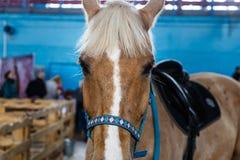 Chevaux de diverses races à l'exposition des chevaux Photographie stock