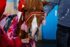 Chevaux de diverses races à l'exposition des chevaux Photo libre de droits