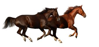 Chevaux de galop Images stock
