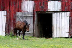 Chevaux de Nashville Photo stock
