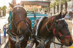 Chevaux de phaéton Transporteur de cheval image libre de droits