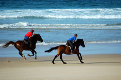 Chevaux de plage Photo stock