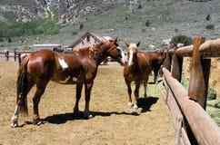 Chevaux de ranch Image libre de droits