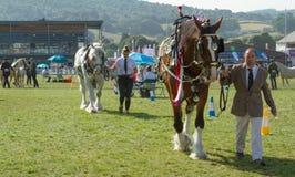 Chevaux de Shire étant montrés au Salon Agricole Royal du Pays de Galles Image libre de droits
