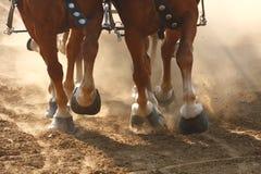 Chevaux de trait tirant un chariot Photos libres de droits