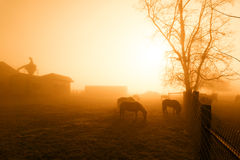 Chevaux en brume de Mornng Image stock