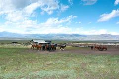 Chevaux en montagnes de Ketmen, Kazakhstan Photo libre de droits