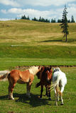 Chevaux en nature Photo stock