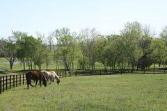 Chevaux en Texas Spring images libres de droits