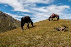 Chevaux et chien sur la colline Images stock