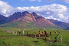 Chevaux et montagne rhyolitique Photo libre de droits