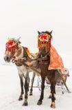 Chevaux et paysage d'hiver Images libres de droits
