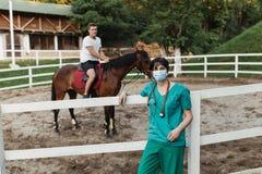 Chevaux et travail vétérinaire images stock