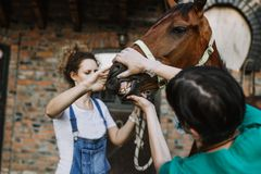 Chevaux et travail vétérinaire photographie stock