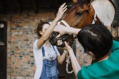 Chevaux et travail vétérinaire image stock