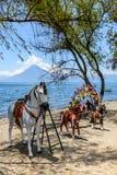 Chevaux et volcan, lac Atitlan, Guatemala Photos libres de droits