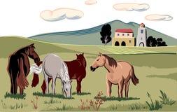 Chevaux frôlant dans un pré illustration stock