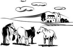 Chevaux frôlant dans un pré illustration de vecteur