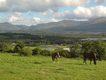 Chevaux, herbe et lacs à Killarney, Irlande Photos stock