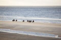 Chevaux islandais sur la plage du nord de seav du vlieland néerlandais d'île Image libre de droits