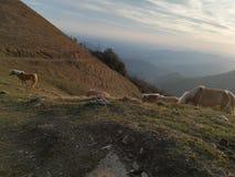 Chevaux libres sur les montagnes photos stock