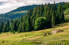 Chevaux par la route près de la forêt photo stock