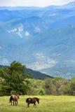 Chevaux, prés alpins Photos stock