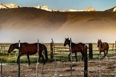Chevaux retournant au corral de ranch près de Bridgeport, la Californie photo stock