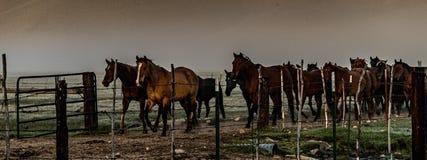 Chevaux retournant au corral de ranch près de Bridgeport, la Californie images libres de droits