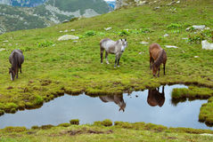 chevaux sauvages photographie stock