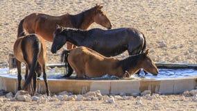 Chevaux sauvages d'Aus - la Namibie Photos libres de droits