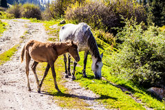 Chevaux sauvages dans la nature Photo libre de droits