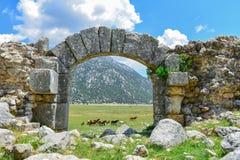 Chevaux sauvages dans la région et sa texture historique Photo stock