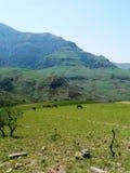 Chevaux sauvages dans le pré de la chaîne de montagne Image stock