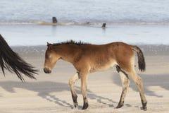Chevaux sauvages de banques externes sur la plage photographie stock libre de droits