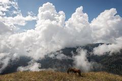 Chevaux sauvages et nuages dramatiques sur le ciel Photo stock