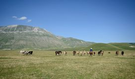 Chevaux sauvages et un cowboy dans le Pian grand de Castelluccio di Norcia images libres de droits