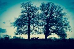 Chevaux sauvages près de Windsor Photo libre de droits