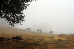 Chevaux sauvages sur la montagne Photo stock