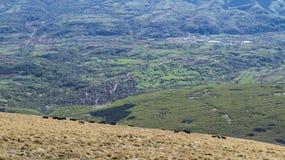 Chevaux sauvages sur la montagne Photos stock