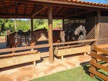 Chevaux se reposant et alimentant dans l'écurie images libres de droits