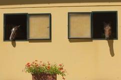 Chevaux stabled à la fenêtre Photographie stock libre de droits