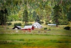 Chevaux sur des terres cultivables près d'une grange rouge   Images libres de droits