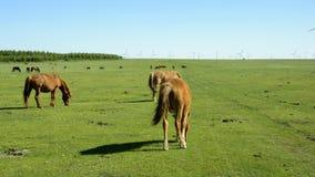 Chevaux sur la prairie Images libres de droits