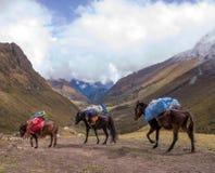 Chevaux sur le journal salcantay au Pérou au col photos libres de droits