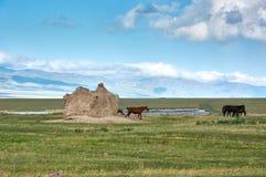 Chevaux sur le plateau en montagnes de Ketmen, Kazakhstan Image libre de droits